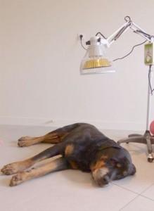Thermothérapie sous lampe chauffante